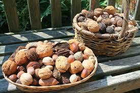 Nut Baskets Big Nut