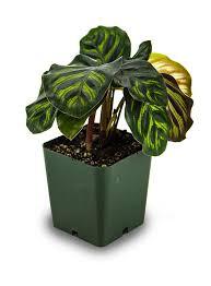 best 25 terrarium plants for sale ideas on pinterest terrarium