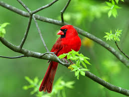 free download images of beautiful birds wallpaper