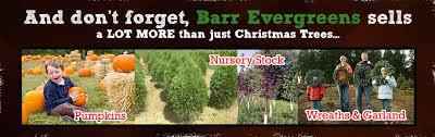 wholesale christmas trees wholesale nursery stock wholesale
