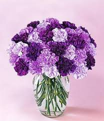 best 25 purple carnations ideas on pinterest carnation wedding