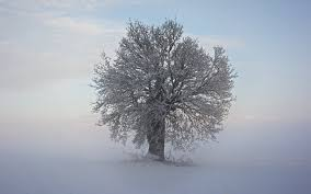 cool trees winter snow cool tree branches hd wallpaper