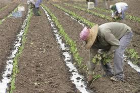 uatre nueva escala salarial para los trabajadores agrarios escala salarial trabajadores agrarios octubre 2014