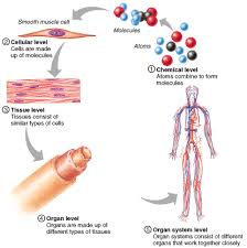 Anatomy And Physiology Introduction To The Human Body Chapter 1 The Human Body An Overview Lessons Tes Teach