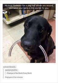 Best Dog Memes - 12 funny dog memes 6 when the lego dog arrives