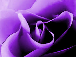 purple purple with a purpose mishegas of motherhood