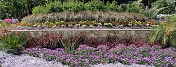 green meadow growers wholesale growers of ornamental grasses