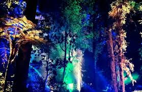 enchanted forest of light tickets discount tickets enchanted forest descanso gardens