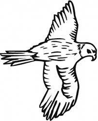 falcon coloring pages to download and print for free
