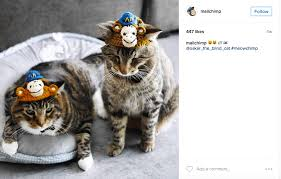 Cat Meme I Should Buy A Boat - how to repost on instagram two easy ways to reshare content