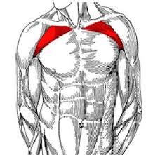 decline bench press muscles muscular strength articles