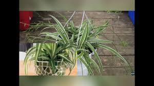 plant for bedroom plants for bedroom youtube