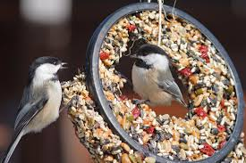 to feed or not to feed audubon