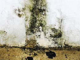 mold removal buffalo ny remediation pros toxic mold usa