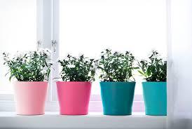 Indoor Plant Vases Plants Plant Pots U0026 Stands Decoration Ikea