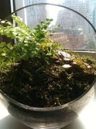 small world terrariums