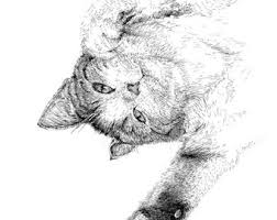 black cat illustration black and white pictures prints of