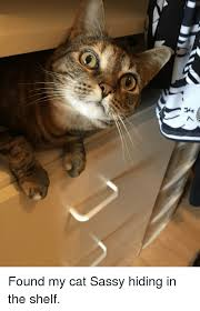 Sassy Cat Meme - found my cat sassy hiding in the shelf sassy meme on sizzle