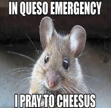 Hilarious Animal Memes - 24 hilarious animal memes the funniest animal memes