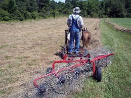 mini horse haying u2013 small farmer u0027s journal