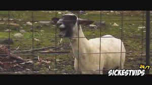 Sail Meme - awolnation sail goat edition youtube