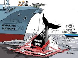 Whaling Meme - paresh nath killing whales karikat禺r cartoon pinterest