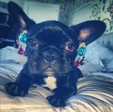 gaga earrings dogs with earrings zeige earrings
