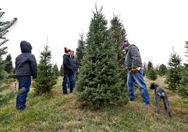 local farms say they u0027re ready with variety of christmas trees