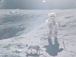cat on the moon 1funny com