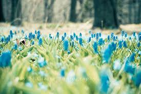oh joy photography spring wallpaper freebie