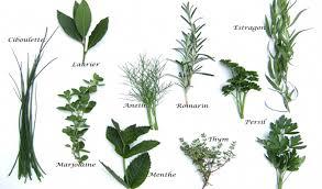 herbes cuisine astuce du jour comment faire sécher les herbes aromatiques