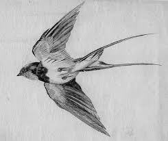 image result for robin flight tattoo tatuajes pinterest