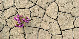 desert flower we have made our planet now we must try to live on it huffpost