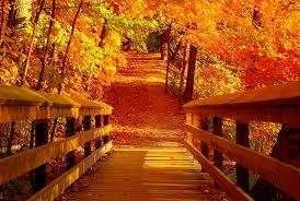 100 photos fall colors 9 trees spectacular fall foliage