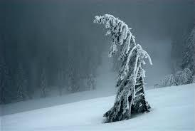 tree in winter fedora magazine