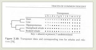 whale evolution data table answer key whale evolution continued origine
