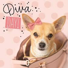 Corgi Birthday Meme - diva day verjaardag chihuahua birthday pinterest quotation