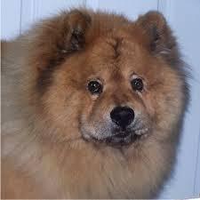 foo dog for sale foo dog