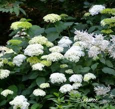 plant profiles ledge and gardens