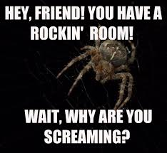 Spider Meme Misunderstood Spider Meme - 5 reasons spiders aren t that scary spider scary and spider meme