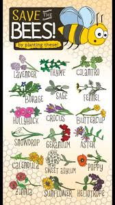 cunningcelt u201c some magical associations for the flowers of