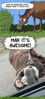 donkey business by nedesem meme center