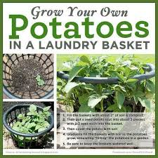 Types Of Vegetables To Grow In A Garden - best 25 grow potatoes ideas on pinterest potato box planting