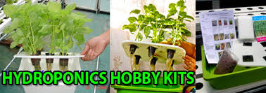 Home Decor Shop Online Singapore Singapore Hydroponics Online Store Home Farming Indoor