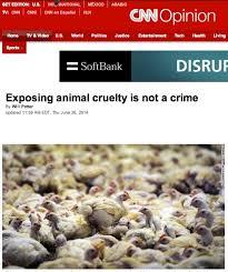 cuisine am ag en u cnn exposing cruelty is not a crime