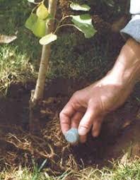 Fertilizer For Flowering Shrubs - agsafe supermyco 20 10 5 biofertilizer organic planting tablets