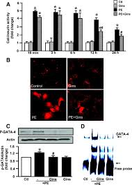 ginseng inhibits cardiomyocyte hypertrophy and heart failure via