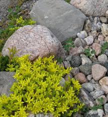 River Rock Garden by Garden Dream Rock Your Landscape