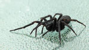 I Tried Killing A Spider - if you must kill that spider the best way is to freeze it smart