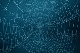 halloween spider web background vermont man finds art in arachnids alpha ecological